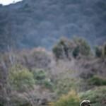 Salah Stétié, Kyoto 2011 : paysage emprunté